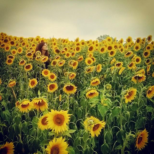 campo girasoles verano summer sunflowers instagram