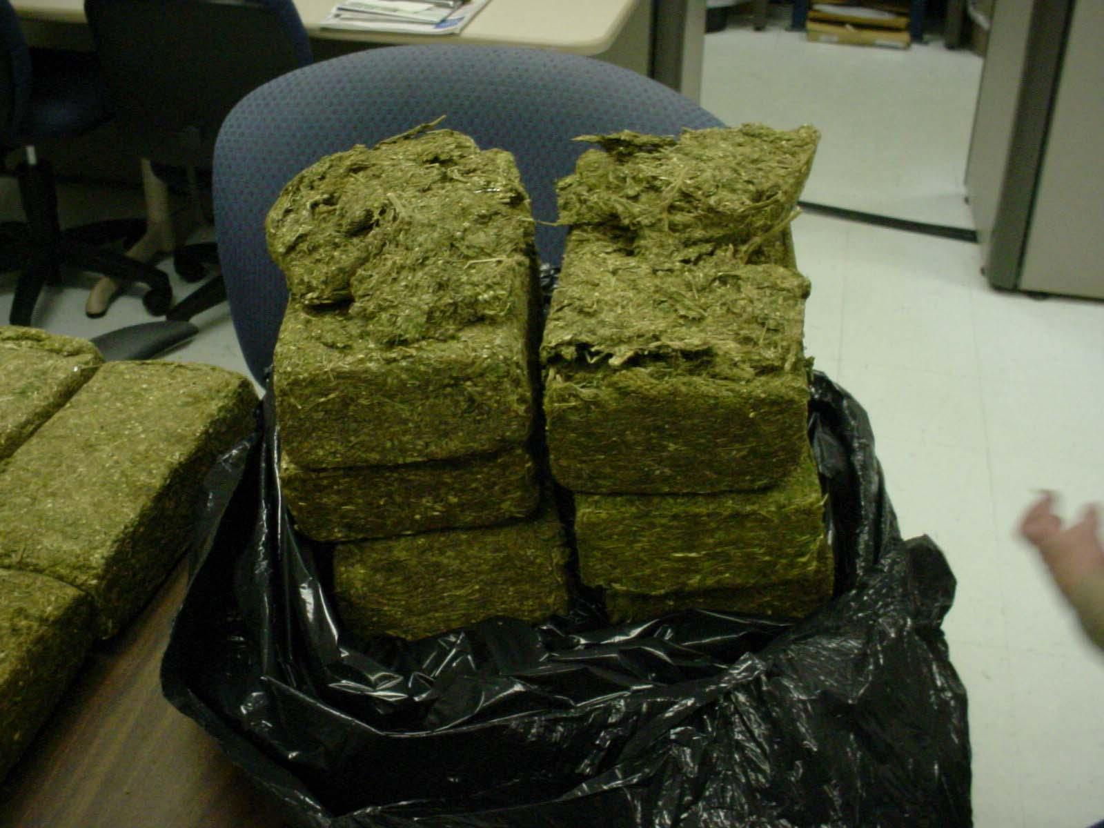 http://1.bp.blogspot.com/-PIj19vyzbVA/TpBLg9o9eBI/AAAAAAAAAVs/KYHl6-v9BOM/s1600/marijuana-bust.jpg