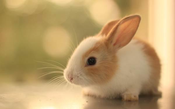 arnab-cute