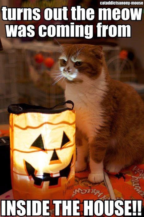 Funny Meme Halloween : Happier than a pig in mud lol cats for happy halloween