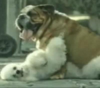 Propaganda da Bridgestone em 2003. Traição e suicídio canino.