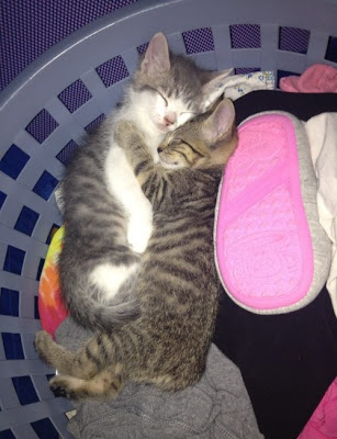 Katzen kuscheln im Wäschekorb
