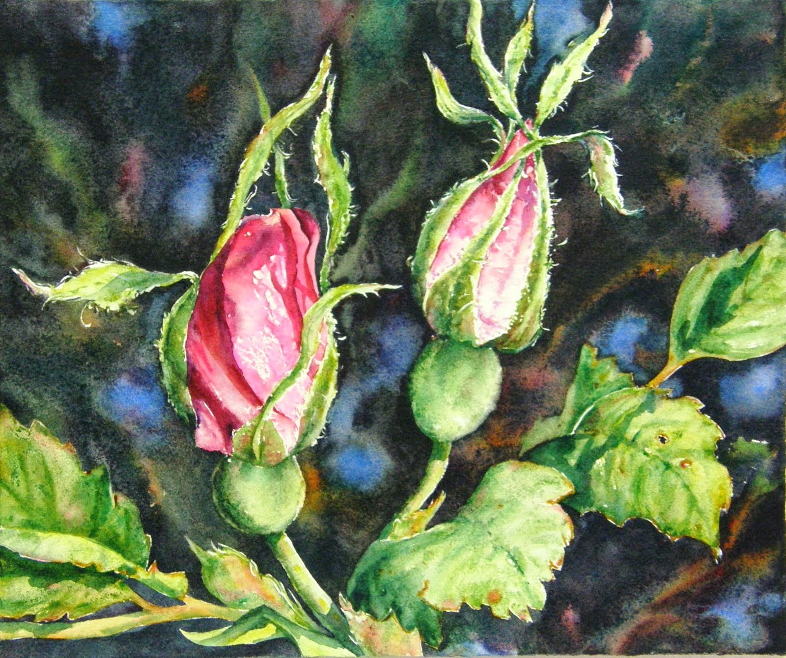 Alberta Rose - Young Buds