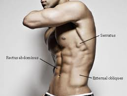 learn how oblique exercises compliment the abs muscles | the best, Human Body