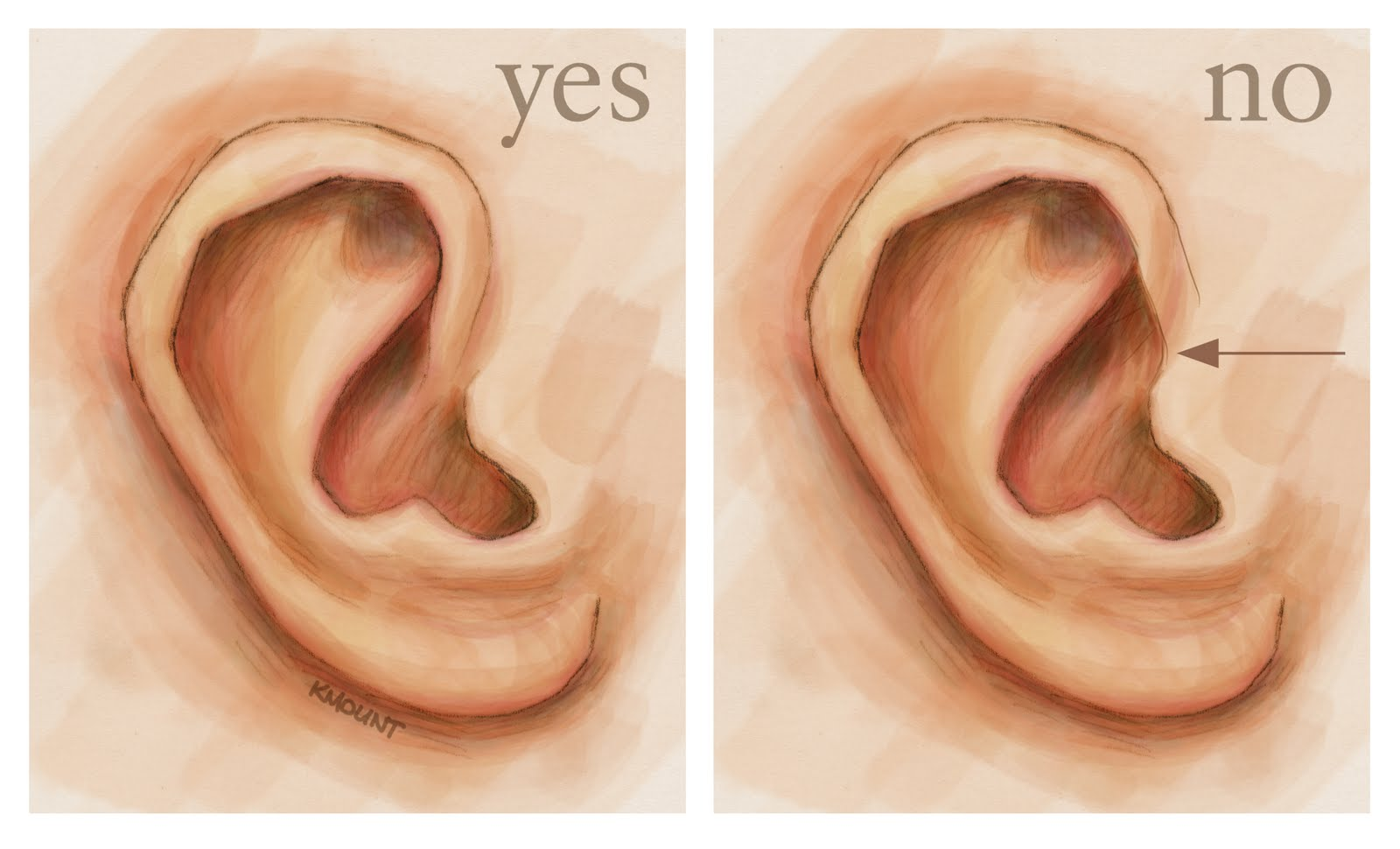 human anatomy for the artist: the external ear: shhh, i'm listening