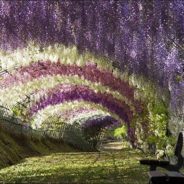 Un paseo por el paraíso: Jardines de ensueño