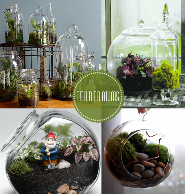 calico skies terrarium diy. Black Bedroom Furniture Sets. Home Design Ideas