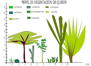perfil de vegetación de quibor xp