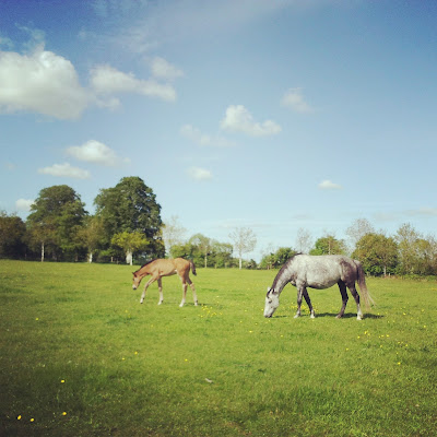 Horses near Ashley Park House in Nenagh, Ireland. Photo by Elena Rosenberg.