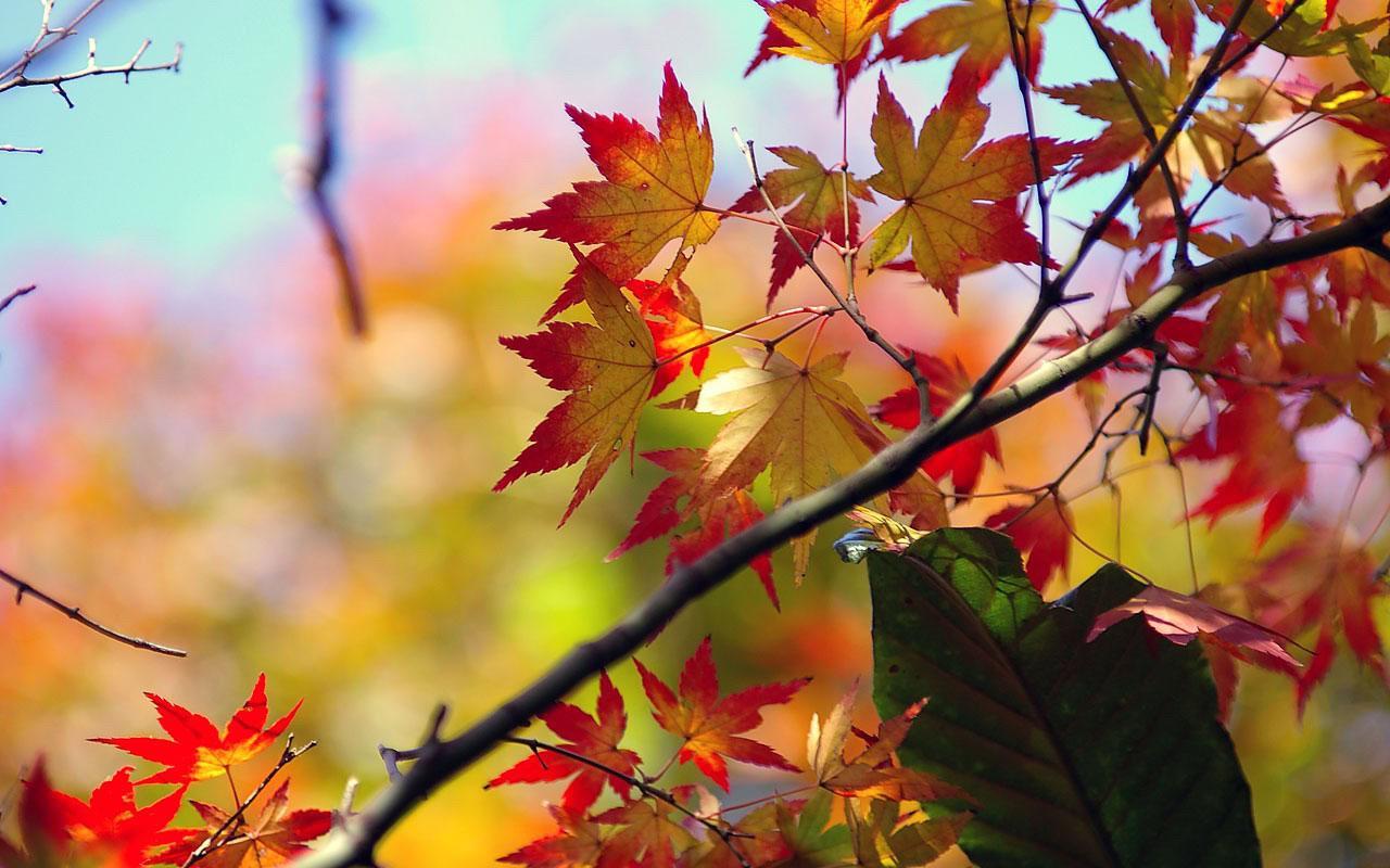 Сочинение на тему золотая осень для 4