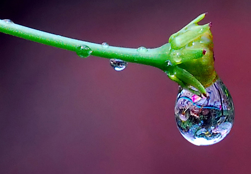 Seberapa Pentingkah Air Bagi Kehidupan di Bumi ini