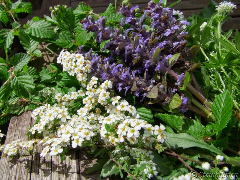 Gartenblumen im Mai