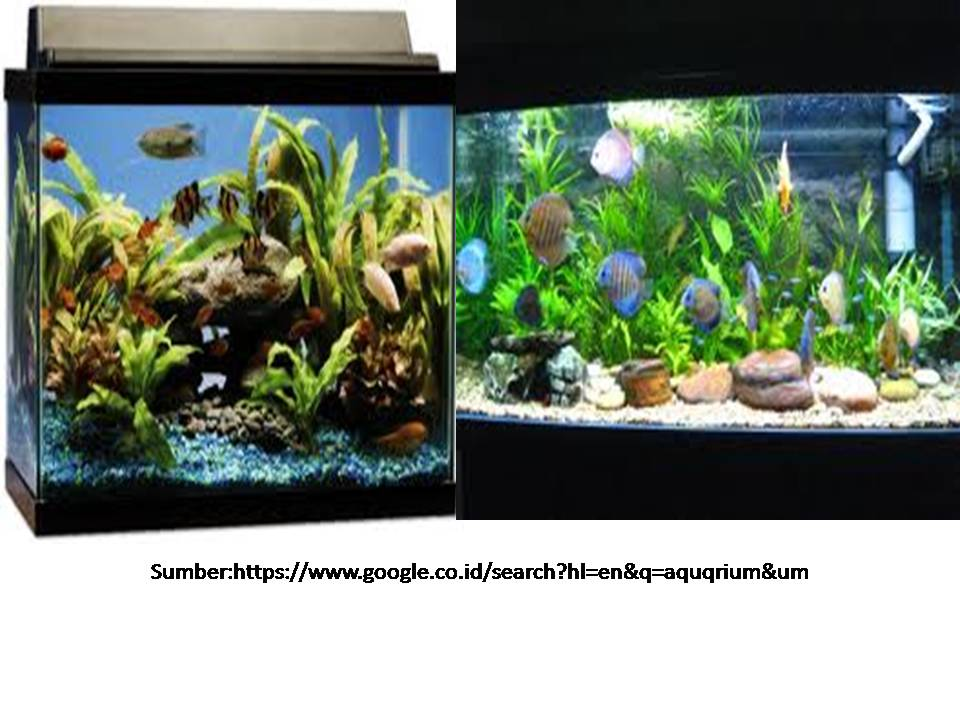 Mikrobiologi Pangan Ekosistem Air Tawar Aquarium