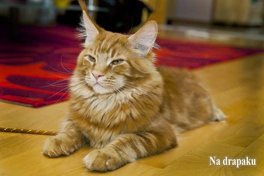 Karmy dla kotów kastrowanych
