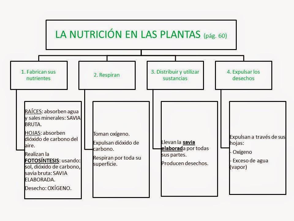 Educación Primaria en el Zapatito: LA NUTRICIÓN EN LAS PLANTAS. ESQUEMA