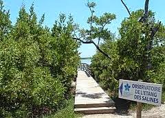 Observatoire des Mangroves en Martinique
