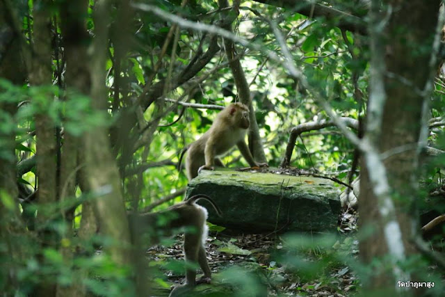 Monkey In Forest Images