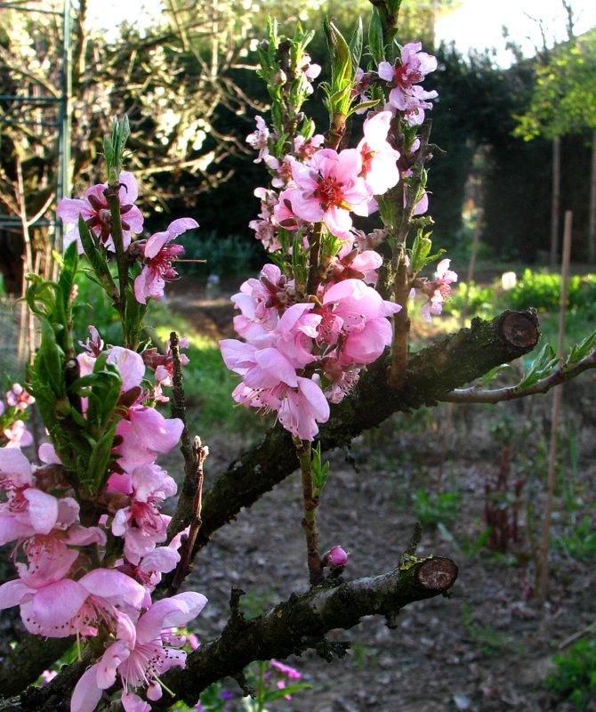 L 39 orto dei colori fiori da frutto 1 for Piante nane da frutto