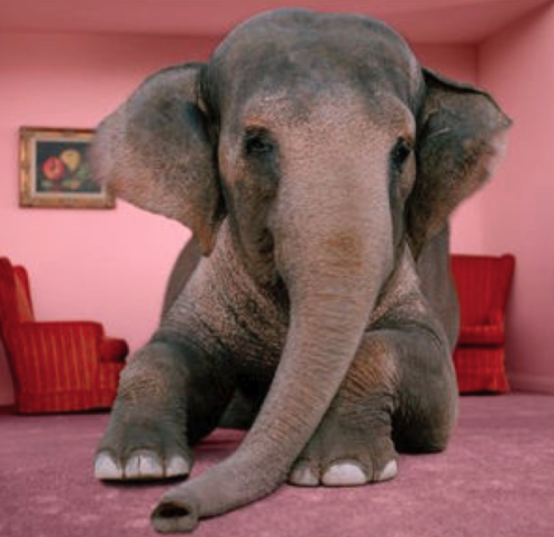 ABCs of DumbDown: The Elephant in the Room