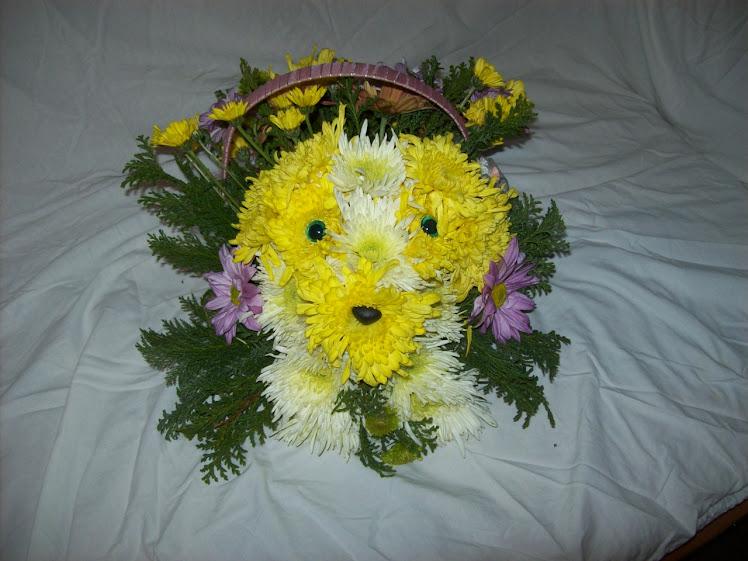 Poodle, uma arte feita com flor do campo