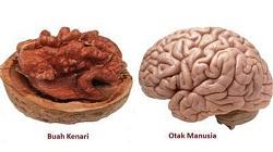 Manfaat buah kenari,khasiat buah kenari, fungsi buah kenari