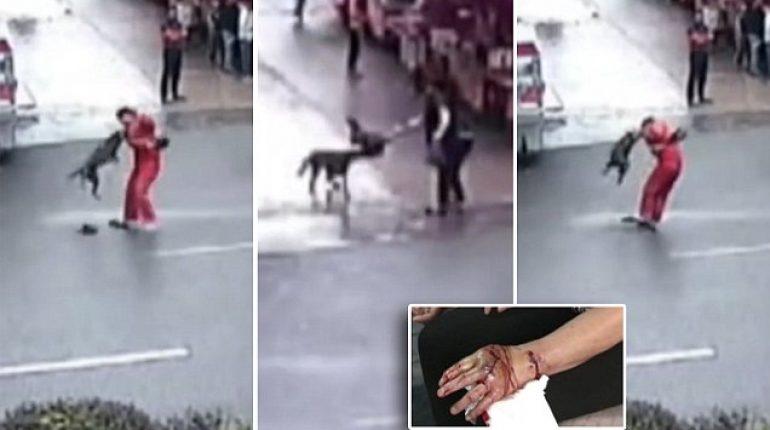 ΦΡΙΚΗ: Σκύλος σε Παράκρουση Κατακρεούργησε Πάνω από 20 Άτομα Μέσα σε 2 Ώρες