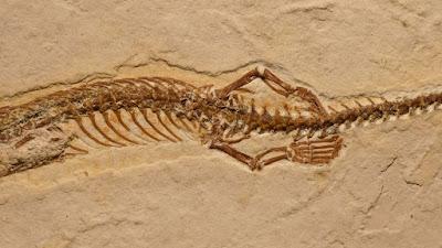 Cientistas descobrem cobra com quatro patas que viveu no Ceará há 120 milhões de anos