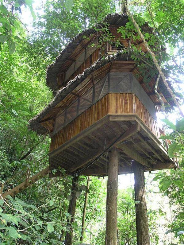 Refrenshi Desain Rumah Diatas Pohon