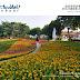 【就是愛荔枝樂園-Alice's Garden】彰化芬園彩虹花海-休閒體健園區變身荔枝樂園