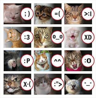 Penilaian emosional kucing
