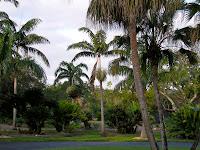 palms, Palmae, palm family