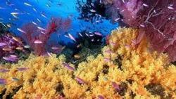sfondi mare e pesci 15