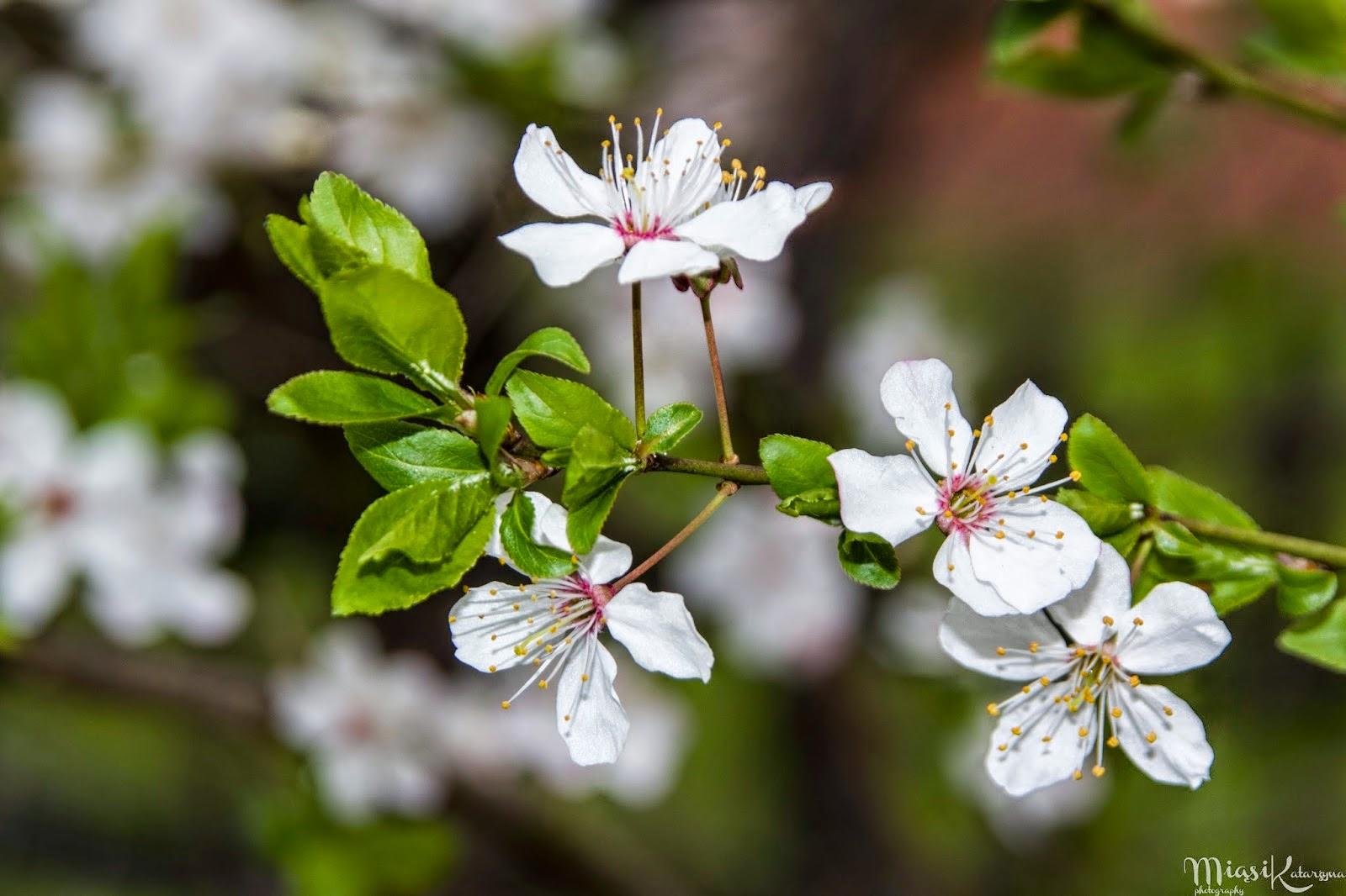 Wiosna w Sopocie