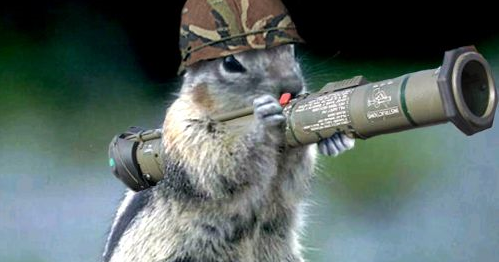 how to build a squirrel launcher