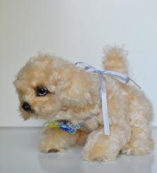 Šunelis Teddy