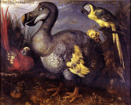 Dodo bird fossils