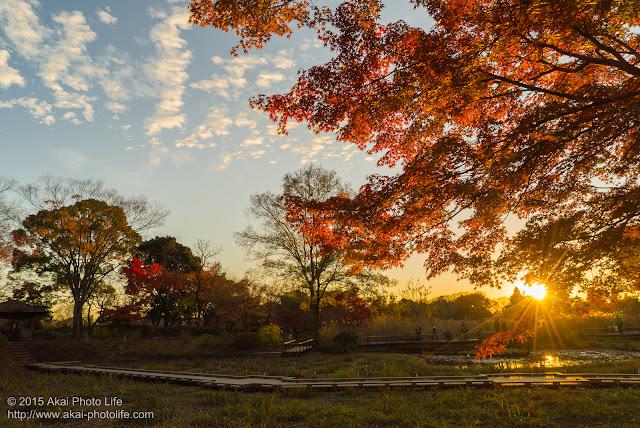 綺麗な夕景と紅葉の写真