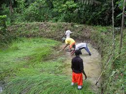 Piscicultura estanques piscicolas Estanques para piscicultura