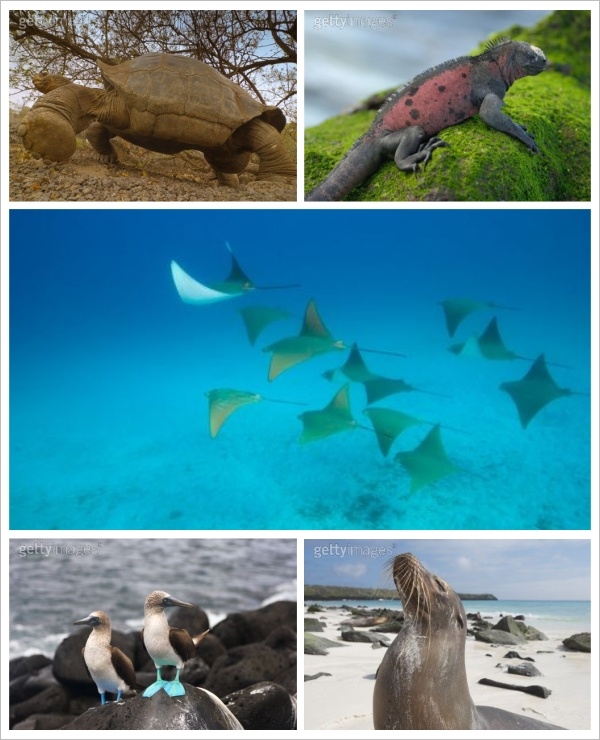 Sobre milhas e voar até Galápagos gastando pouco