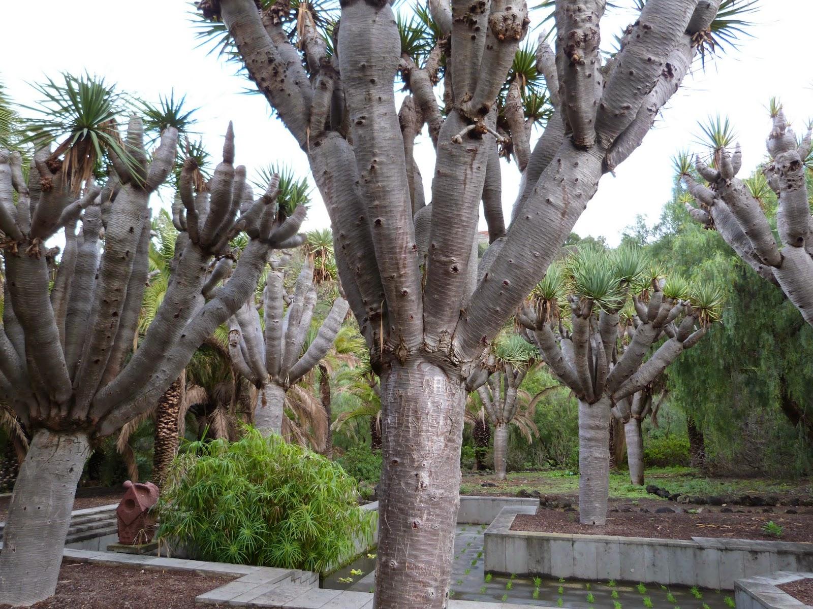 La mar de huellas jard n bot nico viera y clavijo en las - Jardin botanico las palmas ...