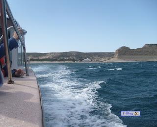 Puerto Madryn - Puerto Pirámides - avistaje de ballenas