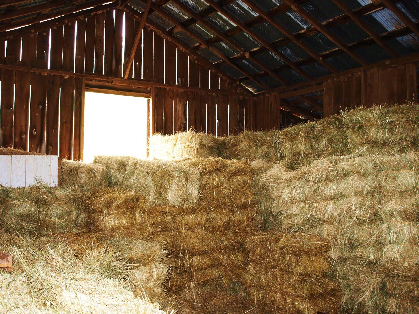 Bolte Farm Spencer WV Love