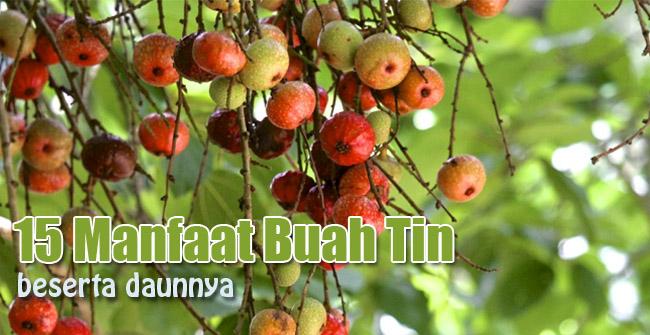 manfaat buah tin atau ara
