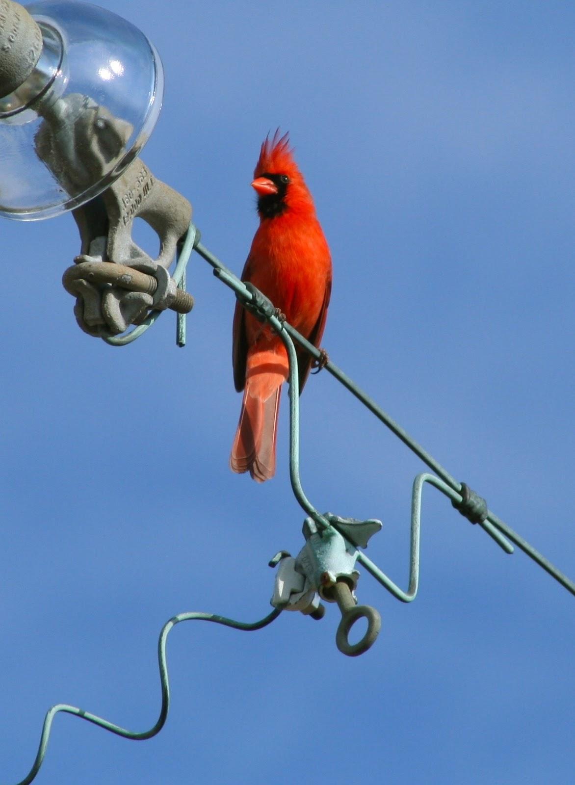 Nc Bird On A Wire - WIRE Center •