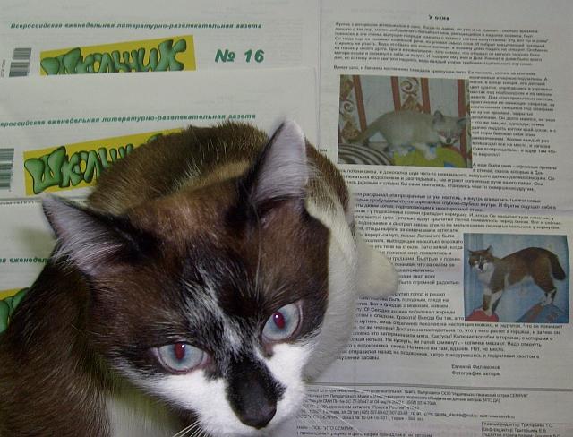 Кот Фунтик на газете