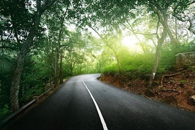 Carretera que cruza los bosques