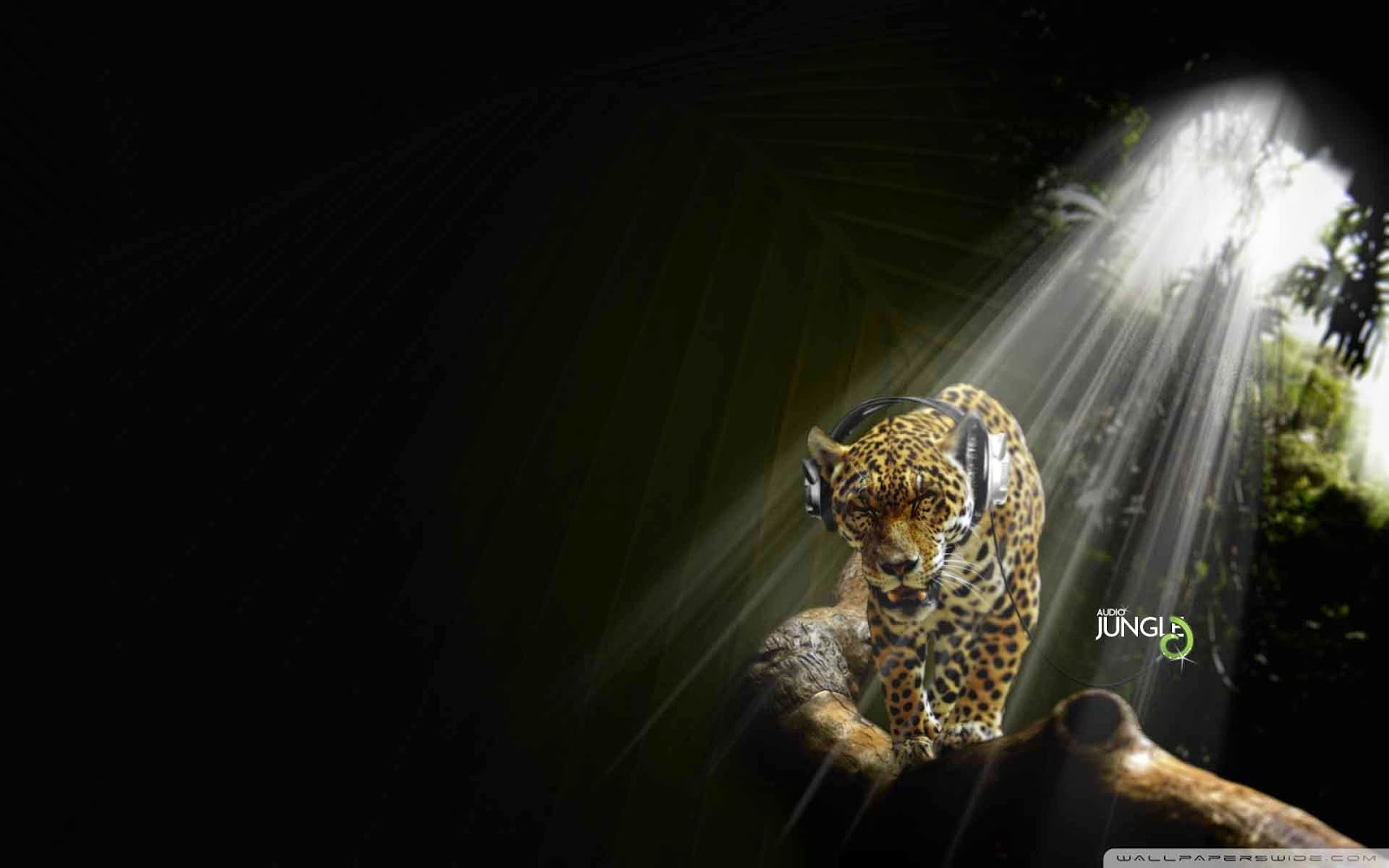 leopard listening music audio jungle wallpaper
