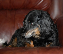Maddie~Our Doxie~