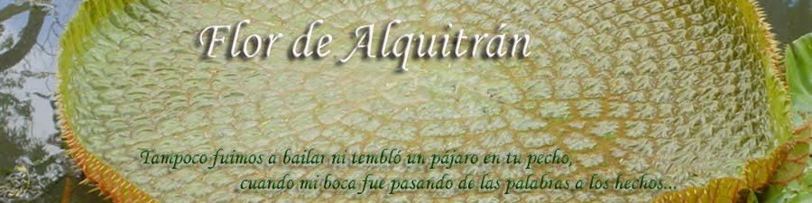 Flor de Alquitrán