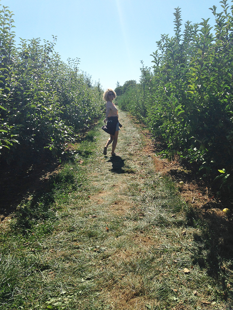 Apple Orchard at Dressel Farms in New Paltz, New York